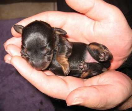 Plus petit que a tu meurs bb04200 - Image bebe chien ...